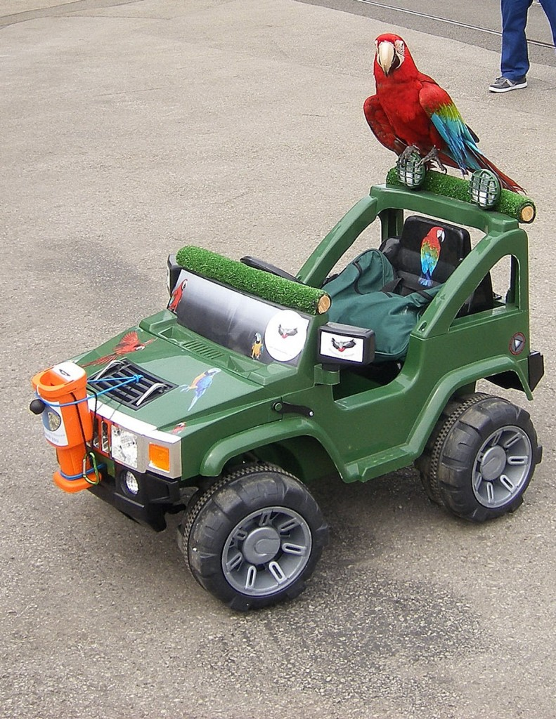 Probably one of the stranger sights on show! A Parrott takes a ride on a remote controller car.